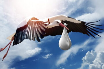 stork carrying baby in sac for acupuncture fertility blog
